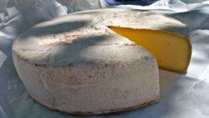 queijo saint nectaire